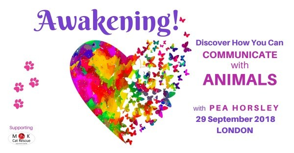 Awakening! The Animal Communication Experience