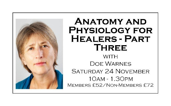 Anatomy and Physiology for Healers - Part Three