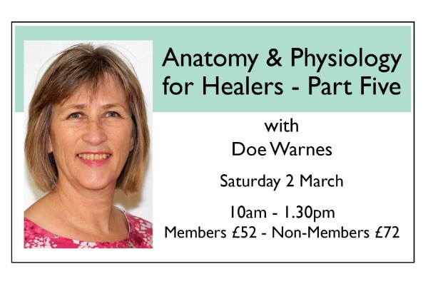 Anatomy and Physiology for Healers - PART FIVE