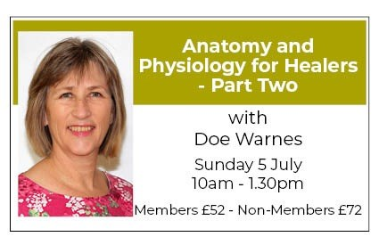 Anatomy and Physiology for Healers - PART TWO - Part 2 - The Organisation of the Body