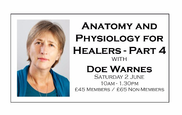 Anatomy and Physiology for Healers - Part Four