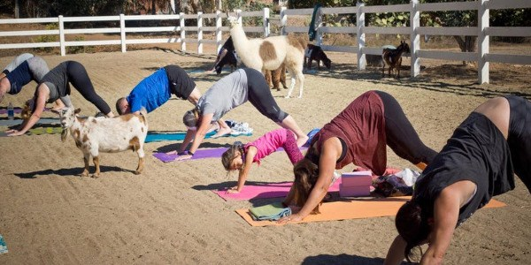 LLAMA'STE Yoga + Meditation Event