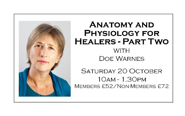Anatomy and Physiology for Healers - Part Two